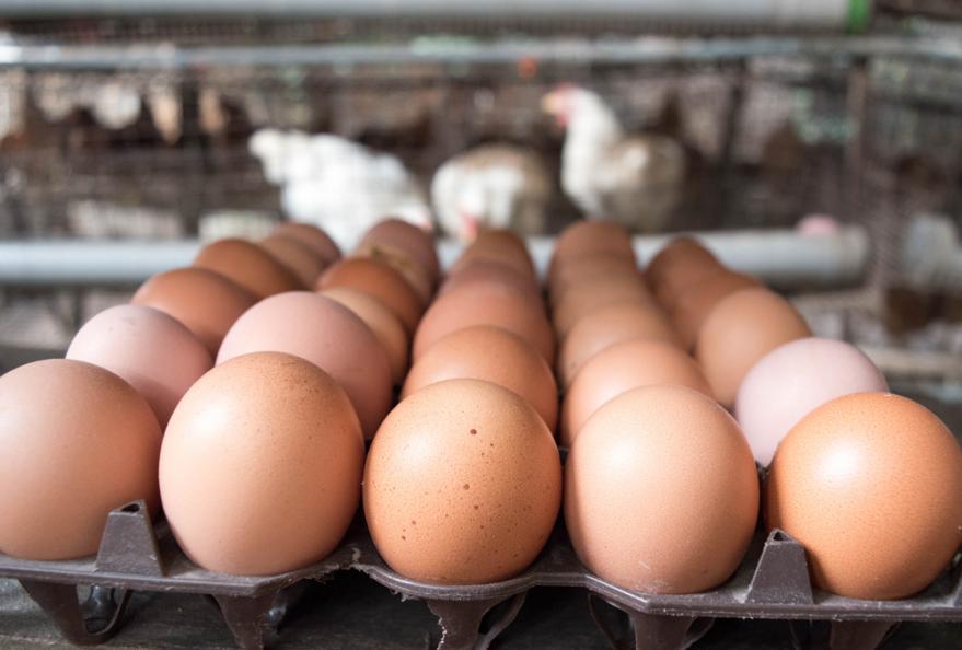 hur många ägg har en kvinna