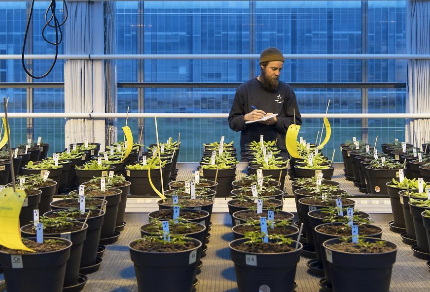 Växterna drivs upp från frö till planta i den testade jorden. Foto: Anna Sigge