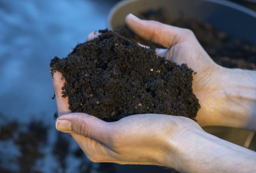 Jordens kvalitet och struktur bedöms innan odlingen startar. Foto: Anna Sigge