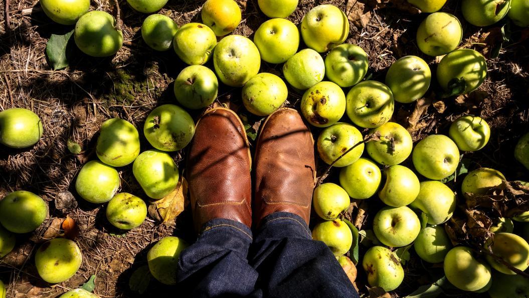 fakta om äpplen