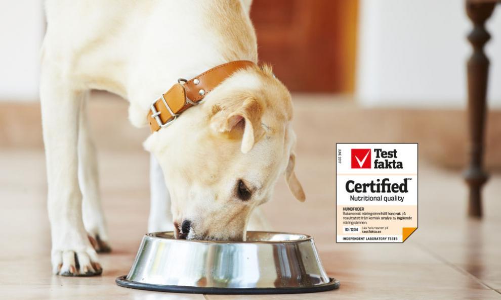 Testfaktas kvalitetscertifiering av hundfoder säkerställer att fodret är näringsmässigt balanserat och att det ger hunden ett korrekt intag av alla nödvändiga näringskomponenter. Foto: Istockphoto